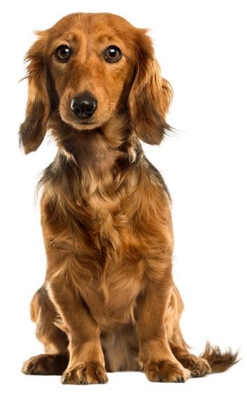 Εκπαίδευση σκυλων Θεσσαλονίκη